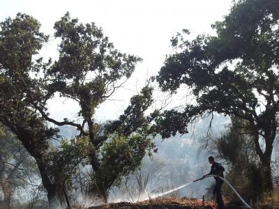 קרית טבעון: יוצא לדרך פרויקט אזורי החיץ ביערות הישוב