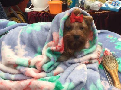 לא התרגשו מהקור המקפיא: אלפים בתערוכת הכלבים בעפולה