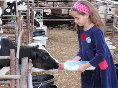 """הפסח הזה כולו טיולים: לאן היום? שביל פרות החלב או חיפוש האפיקומן  ב-""""דרך העץ"""""""