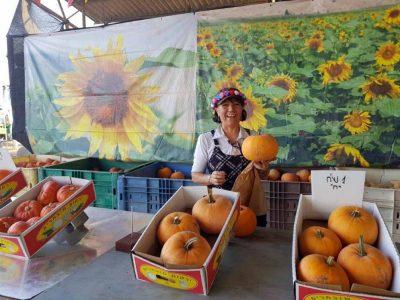 שבועות בעמק המעיינות: חגיגת תוצרת מקומית