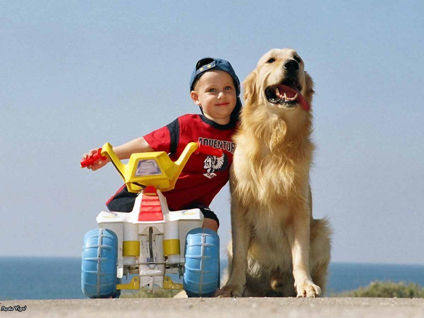 """""""כלב מי שלא בא"""": תערוכת הכלבים הבינלאומית חוזרת למעיין חרוד"""