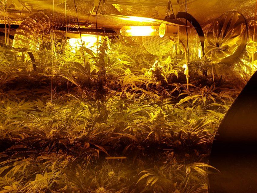 עפולה: המשטרה חשפה מעבדה להפקת סמים באוהל בסלון דירה
