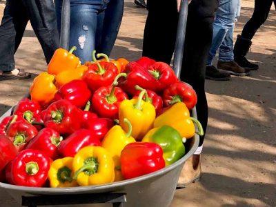 """חברות מהעמקים יציגו חידושים בתערוכה החקלאית מו""""פ ערבה תיכונה וצפונית"""