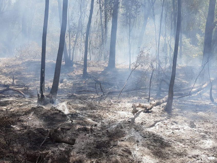 חם, אש: שריפות בגלבוע ובמגידו