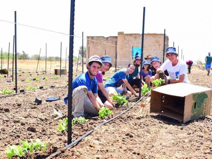 חופש חקלאי: במקום להשתעמם יוצאים להתחבר לאדמה